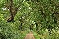 Landican Lane - panoramio (1).jpg