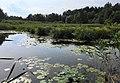 Lanzendorfer Moor, Gemeinde Poggersdorf, Klagenfurt Land.jpg