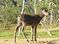 Lapland - Urho Kekkonen National Park - 20180728172805.jpg