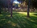 Larache Forest.jpg