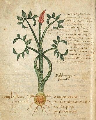 Pseudo-Apuleius - Image: Leiden Dragontea