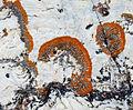 Lichen on Nunavut rocks.jpg