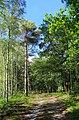 Lieberoser Heide 37.jpg