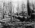 Loggers barking trees, Bordeaux Brothers camp, Mason County, Washington, ca 1895 (INDOCC 318).jpg