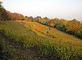 Lohrberg-blick-2011-ffm-118.jpg