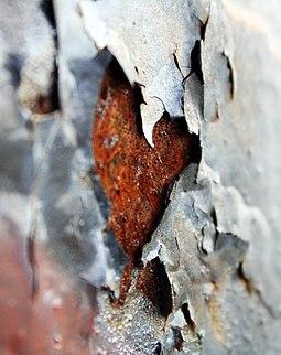 Отслаивающаяся краска обнажает участки ржавой поверхности листового металла.