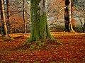 Loweswater woods - panoramio.jpg