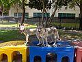 Luna and Pollux.jpg