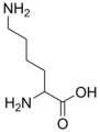 Lysine simple.png