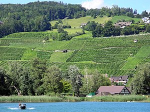 Männedorf - Zürichsee - Dampfschiff Stadt Zürich 2012-07-22 16-47-37 (P7000).JPG