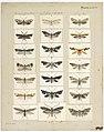MA I437895 TePapa Plate-XXXIV-The-butterflies full.jpg