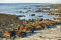 MK-08245 Hamelin Pool Stromatolites.jpg