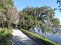 Magnolia Plantation and Gardens - Charleston, South Carolina (8555392719).jpg