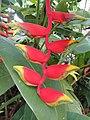 Malaysia Flower - panoramio.jpg