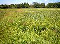 Markham prairie 3.JPG