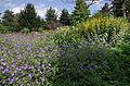 Massifs de fleurs - Parc floral.JPG