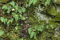 Mauerreste Burg Bilstein, Hessen, Deutschland IMG 1231 2 3 4 5 6 7 edit.jpg