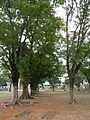 Mayantoc,Tarlacjf8457 05.JPG