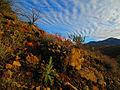 Mazatzal Landmark Mount Ord.jpg
