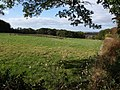 Meadow by Highermoor Plantation - geograph.org.uk - 1553115.jpg