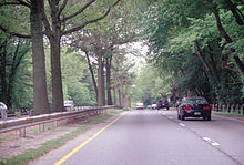 Trees in the center of the Merritt Parkway road
