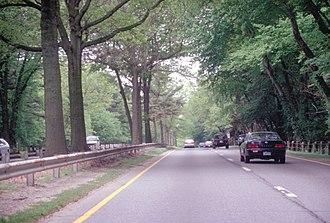 Merritt Parkway - Tree canopy over the Merritt, and grassy median
