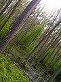 Mezs - purvs - panoramio.jpg