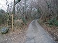 Minor road through Hitchcombe Wood - geograph.org.uk - 1116660.jpg