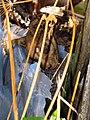 Moggessa di Quá mummified cat 2008 1004 05.JPG