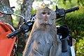 Monkey Kai Bae.jpg