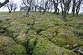 Mossy Clints - geograph.org.uk - 89789.jpg