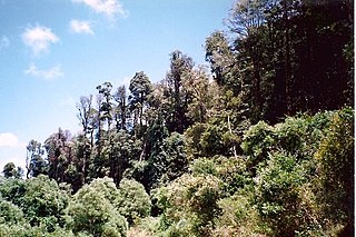 Mount Hyland Nature Reserve Protected area in New South Wales, Australia