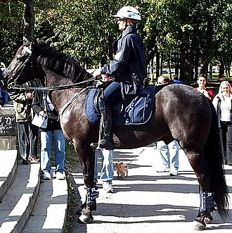 Horse tack - A horse equipped with a saddle for mounted police.