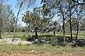 Murrin Bridge Aboriginal Community 001.JPG