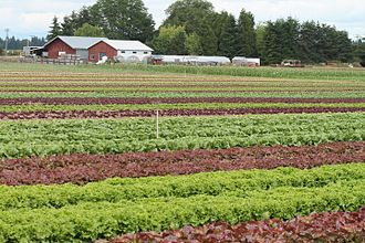 Community-supported agriculture - Mustard Seed Farms, an organic CSA farm in Oregon