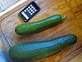Mutant Giant Zucchini (2754812599).jpg