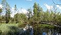 Muurame nature trail4.jpg