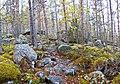 Muuratsalo - trail 4.jpg