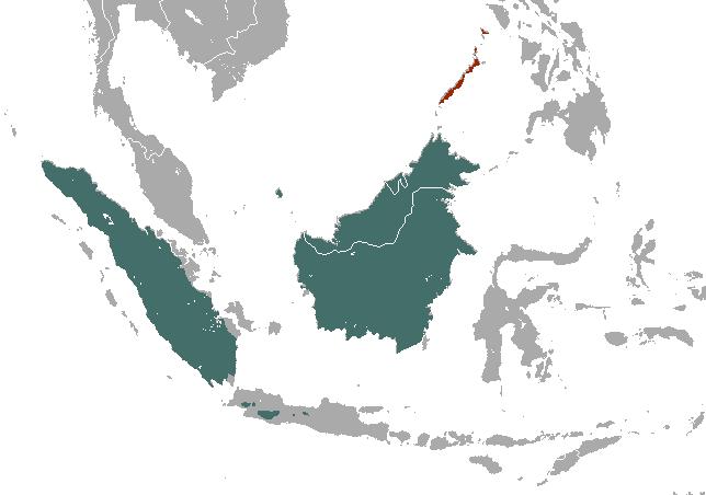 Mydaus areas