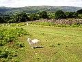 Mynydd Llanwenarth - geograph.org.uk - 447480.jpg