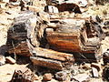 NA-petrified-forest-1.jpg