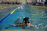 NAF Atsugi swim meet 141017-N-EI558-004.jpg