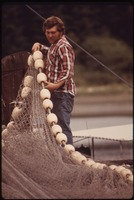 NICK JERKOVICH, JR., OF GIG HARBOR, A SMALL FISHING COMMUNITY IN SOUTHERN PUGET SOUND, WORKS ON SEINE NET FOR SALMON... - NARA - 552298.tif