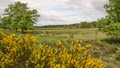 NRW, Kreis Viersen, NSG Luesekamp u. Boschbeek (VIE-005), landscape - inland dune, wet meadow.tif