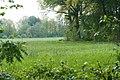 NSG Hansdorfer Brook (0) DxO.jpg