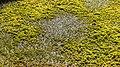 Nationaal Park Drents-Friese Wold. Locatie Fochteloërveen 01-09-2020. (actm.) 13.jpg