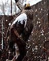 National Aviary (13020032875).jpg