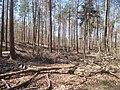 Natur Pfälzerwald bei Kaiserslautern 4.jpg