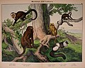 Natural history of the animal kingdom for the use of young people (Plate III) (5974928010).jpg