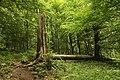 Nature reserve Žižkův vrch in summer 2012 (21).JPG